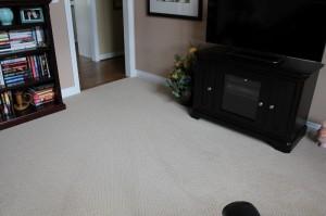 Carpet_Brownstown B16