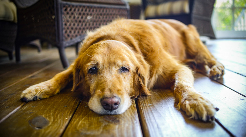 How To Protect Your Floors From Your Pets