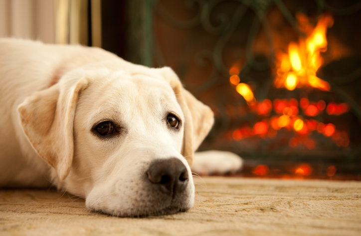 How To Keep Your Floors Safe From Pets This Winter