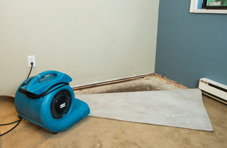 How Water Damage To Your Carpet Affects Your Health